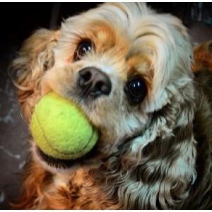 Homeopatik Remediler Köpeğim için Güvenli mi ?