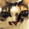 Kedilerin Mart Sıkıntısı ve Homeopati