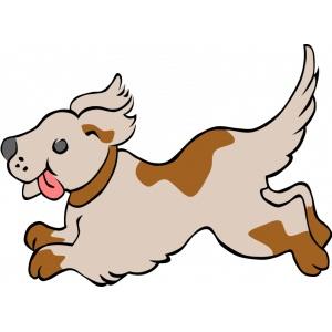 Köpekler için Homeopati